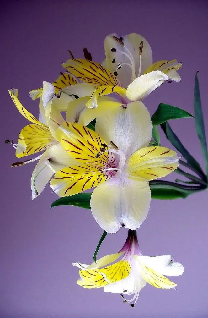 Flower-1418.jpg