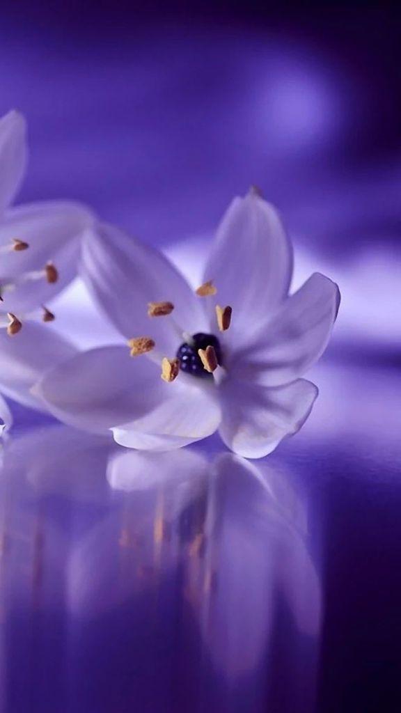 Flower-1420.jpg