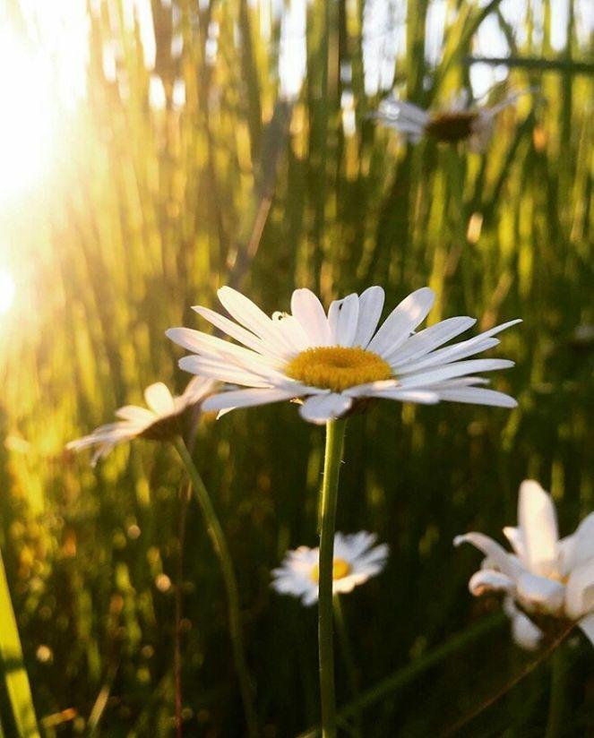 Flower-1422.jpg