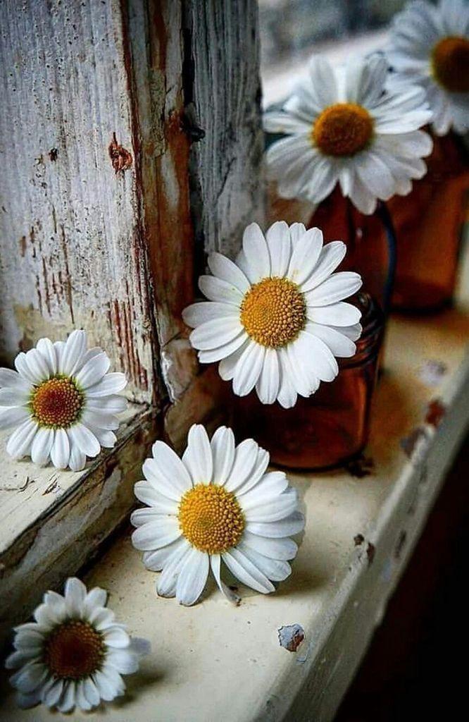 Flower-1423.jpg