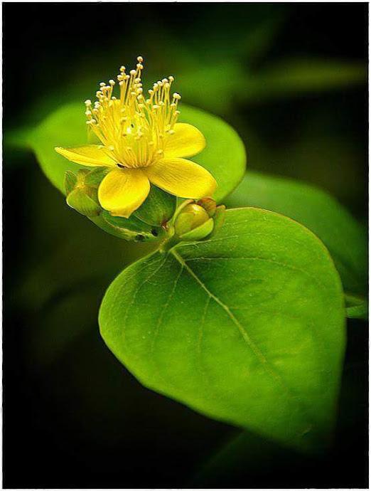 Flower-1089.jpg