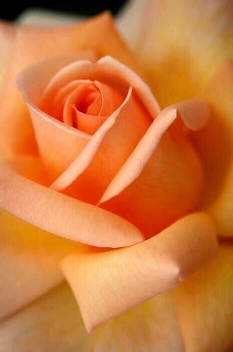 Flower-1092.jpg