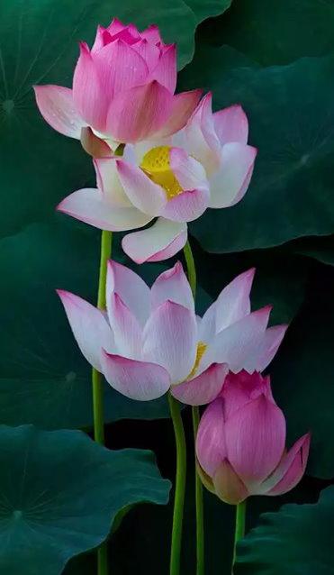 Flower-1091.jpg