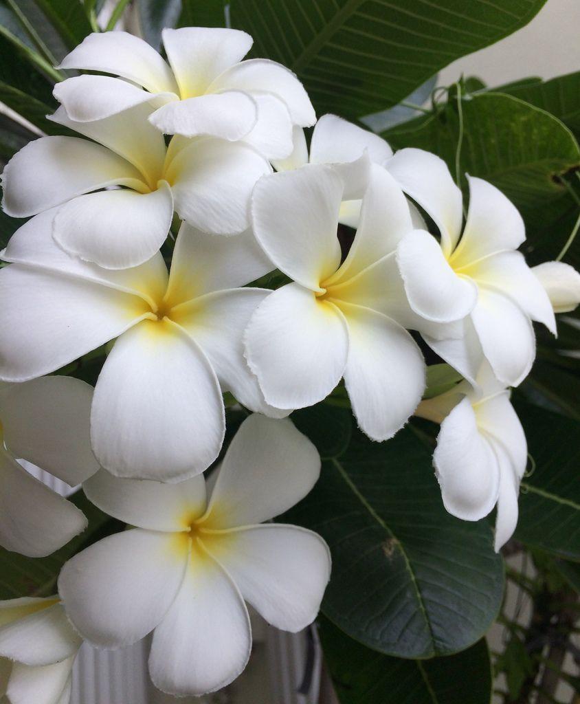 Flower-1425.jpg