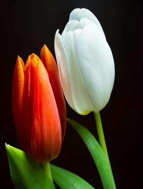 Flower-1426.jpg