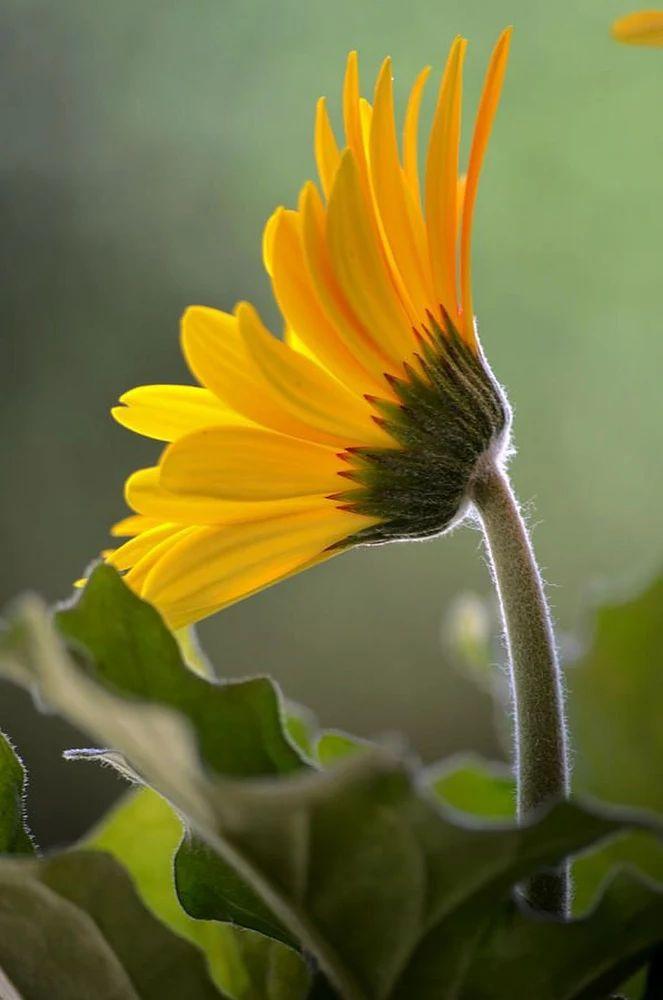 Flower-1427.jpg