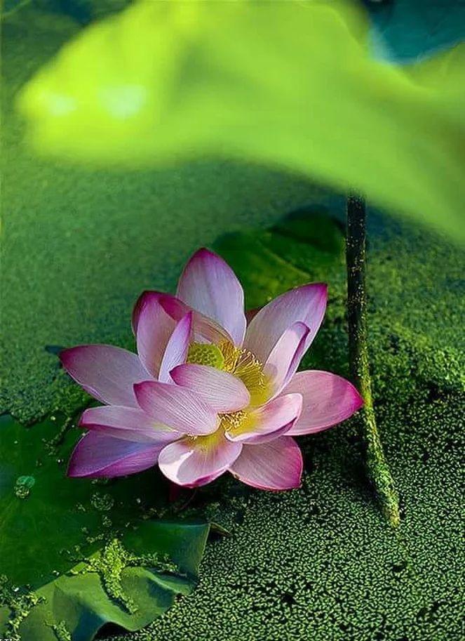 Flower-1428.jpg