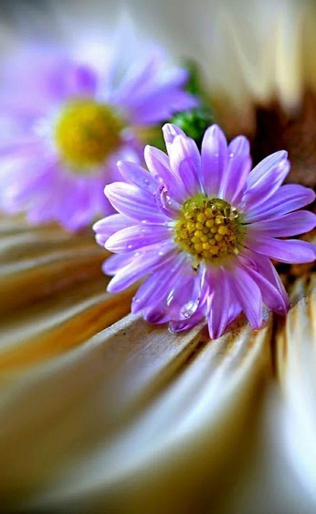 Flower-1430.jpg