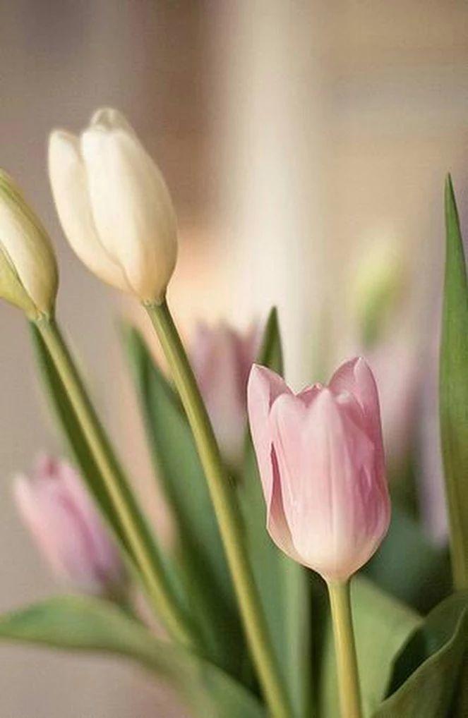 Flower-1458.jpg
