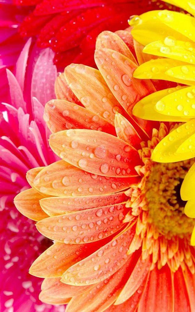Flower-1460.jpg