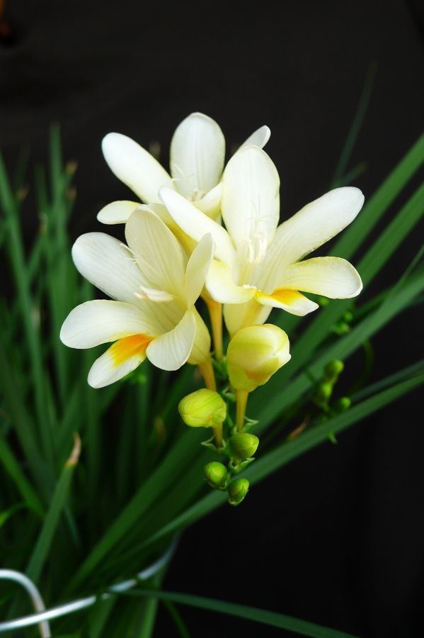 Flower-1516.jpg