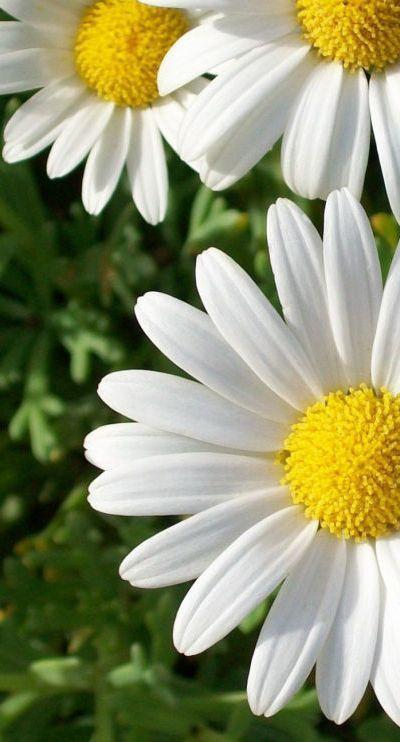 Flower-1521.jpg