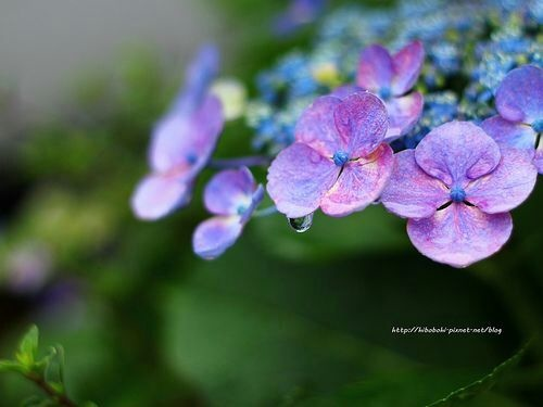 Flower-1151.jpg