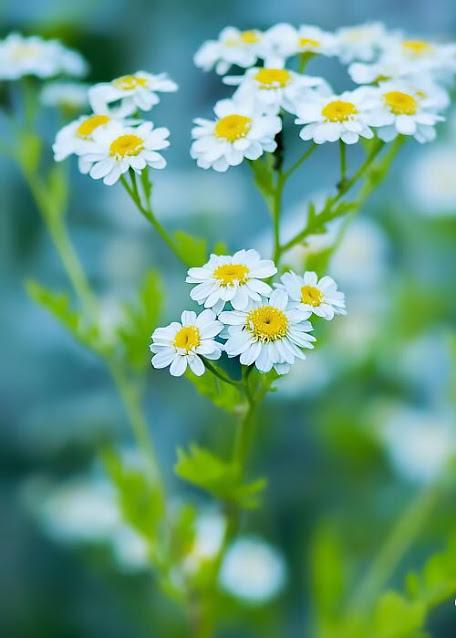 Flower-1150.jpg