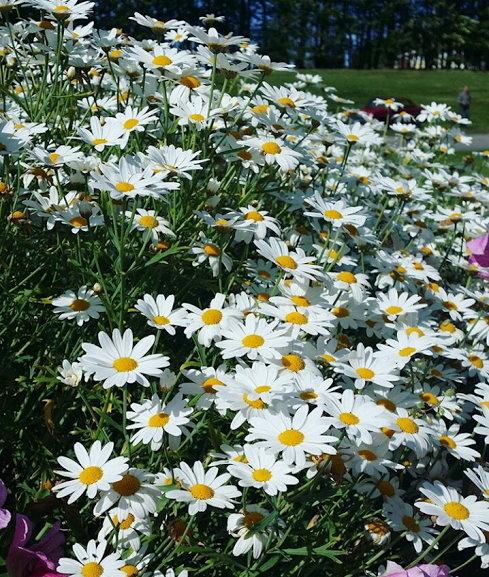 Flower-1153.jpg