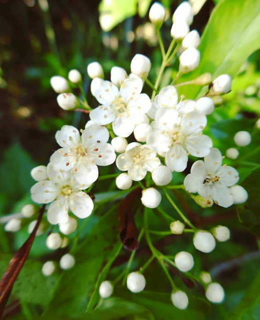 Flower-1152.jpg