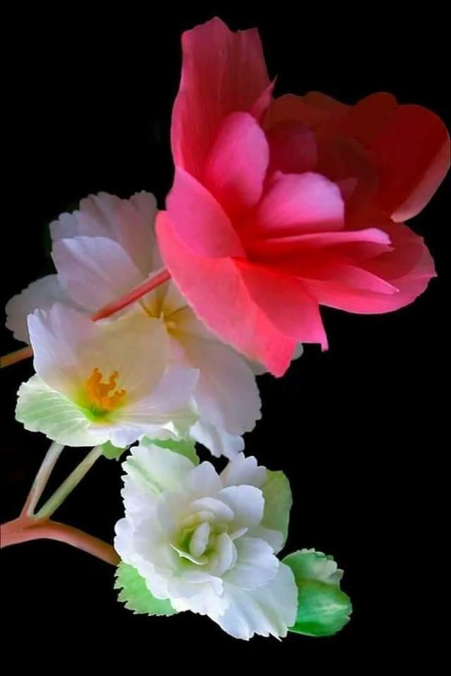 Flower-1549.jpg