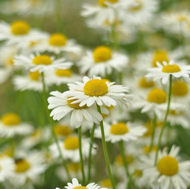 Flower-1168.jpg