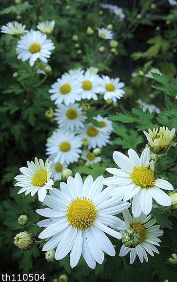 Flower-1169.jpg