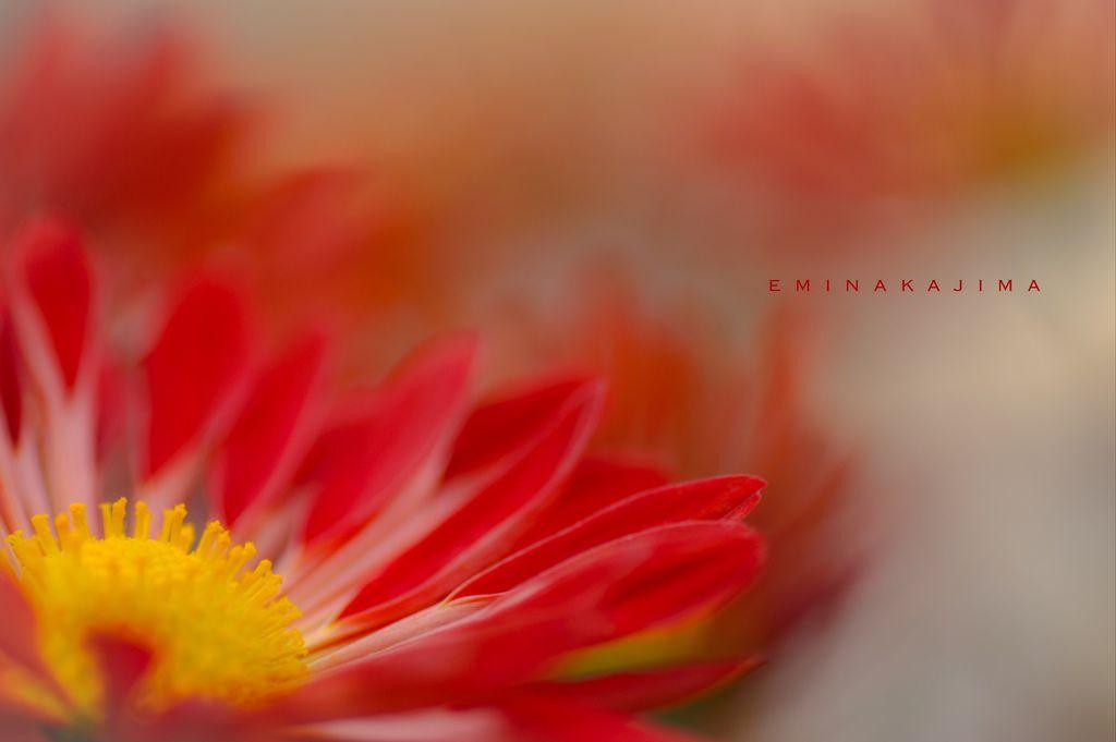 Flower-1167.jpg