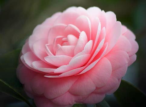 Flower-1166.jpg
