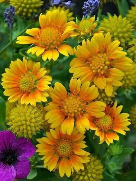 Flower-1172.jpg