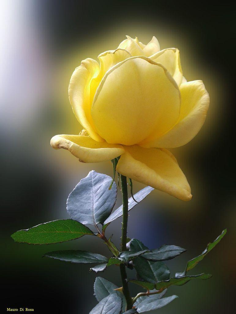 Flower-1171.jpg