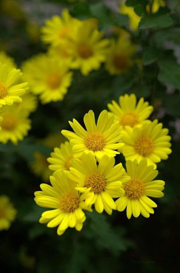 Flower-1173.jpg