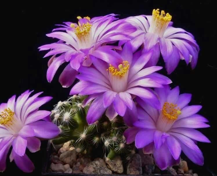 Flower-1170.jpg