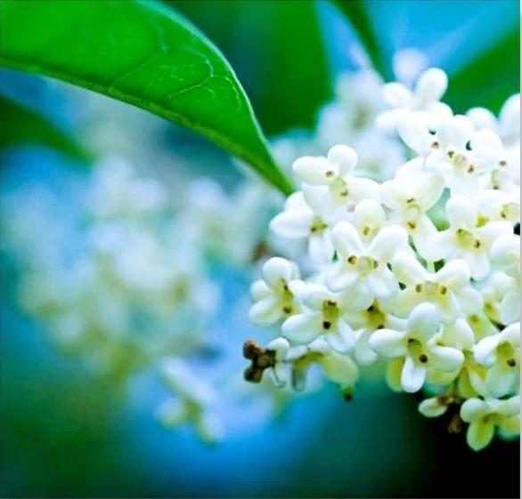 Flower-1613.jpg