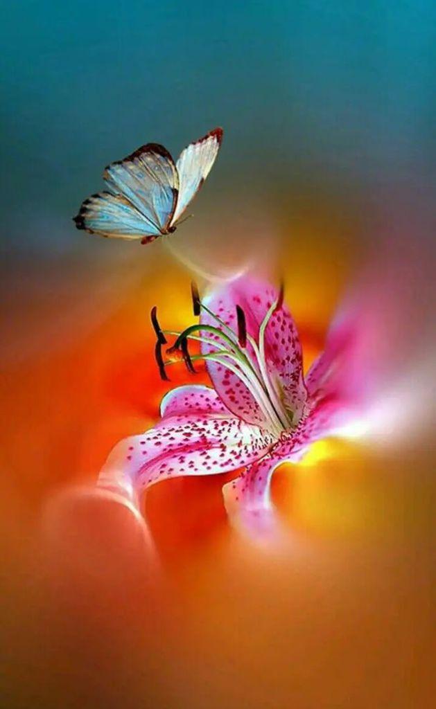 Flower-1624.jpg