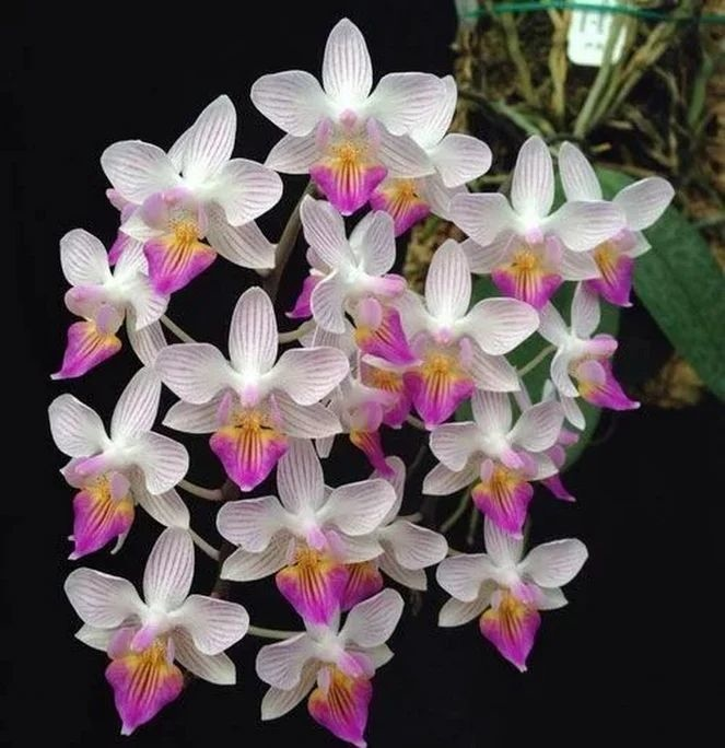 Flower-1625.jpg