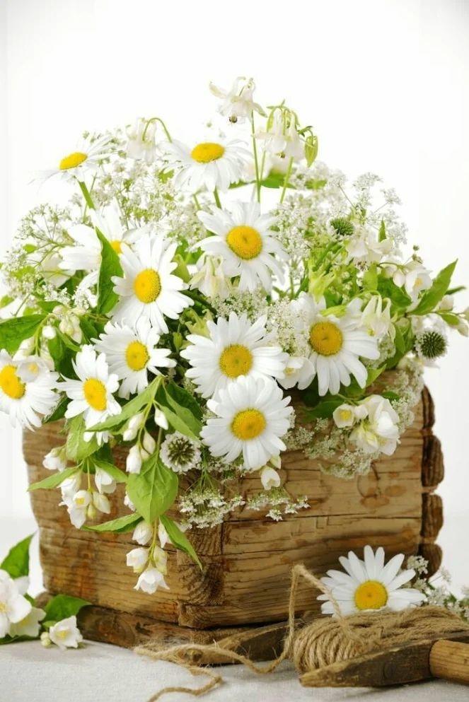Flower-1627.jpg