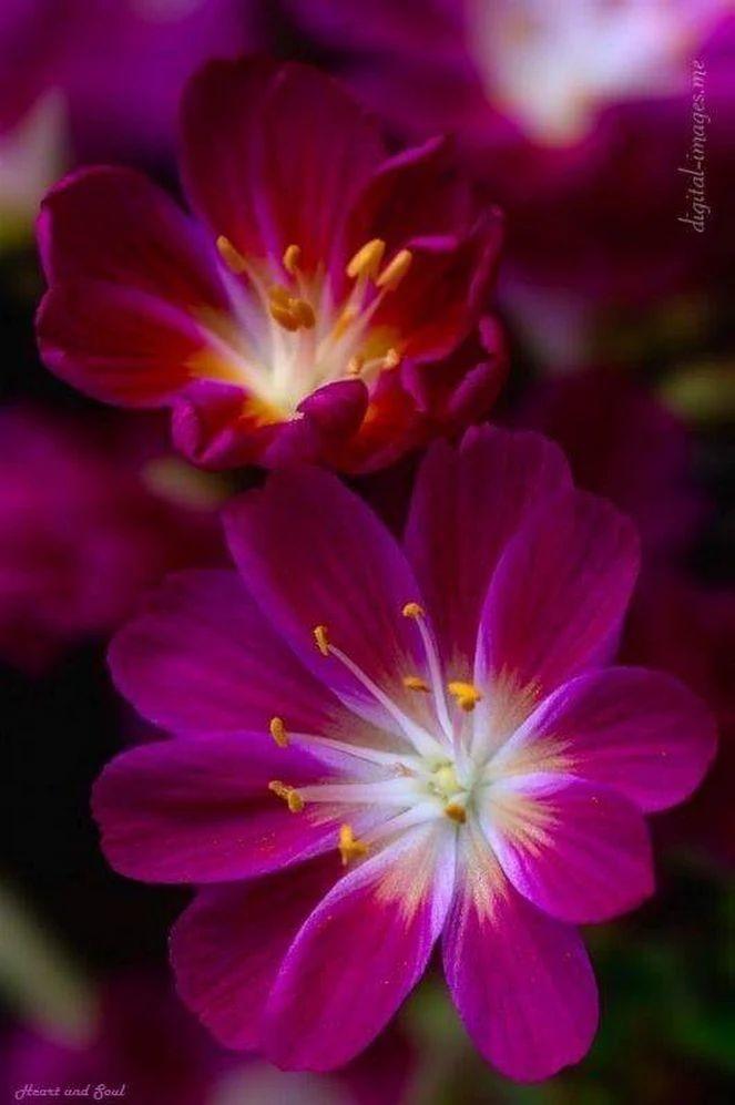 Flower-1628.jpg