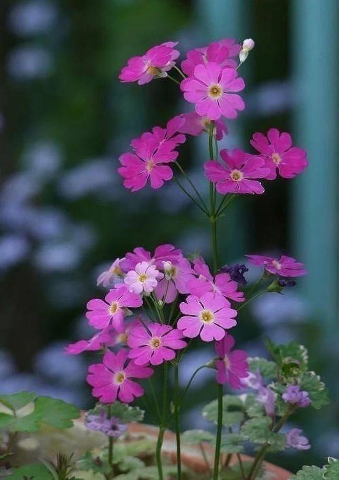 Flower-1629.jpg