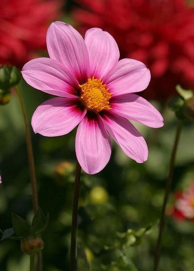 Flower-1631.jpg