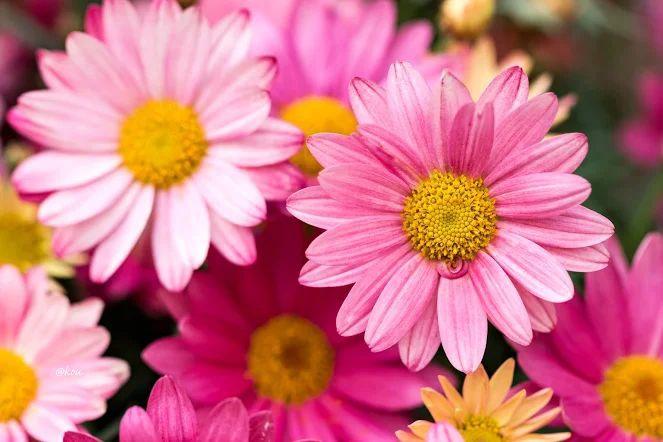 Flower-1632.jpg