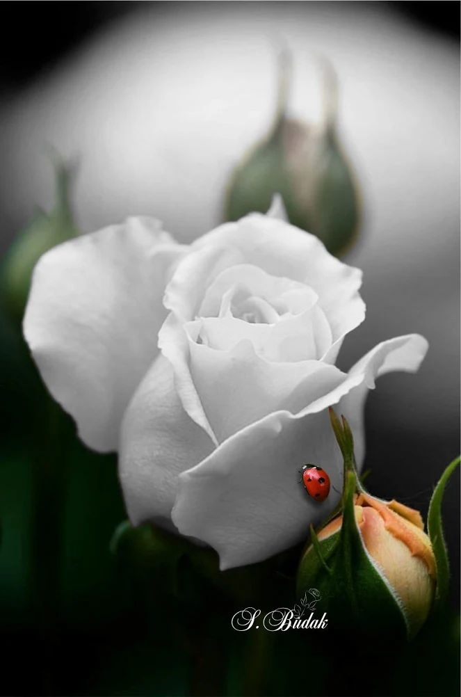 Flower-1633.jpg