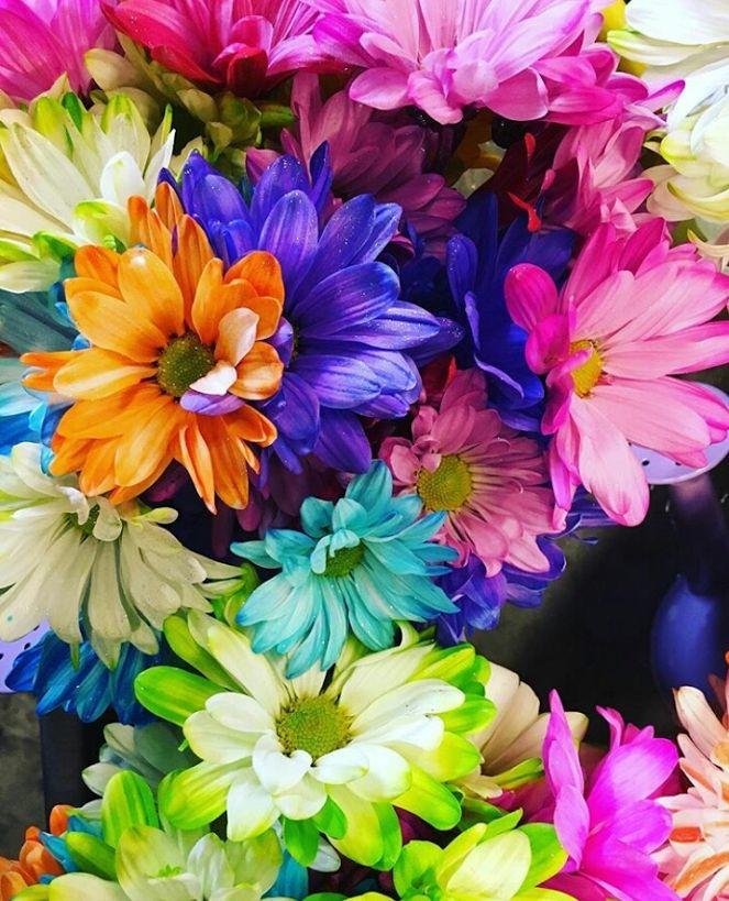 Flower-1634.jpg