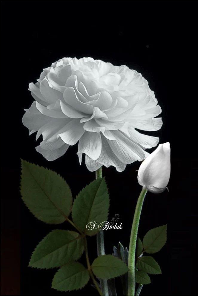 Flower-1636.jpg