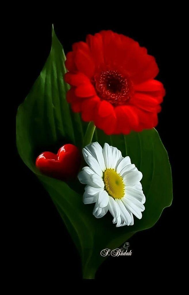 Flower-1638.jpg