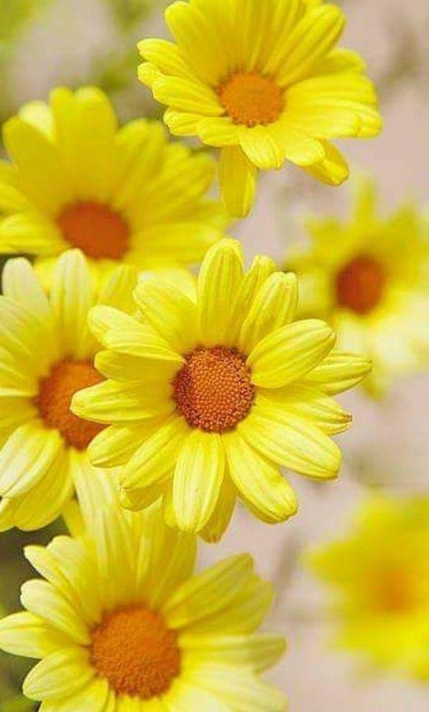 Flower-1640.jpg