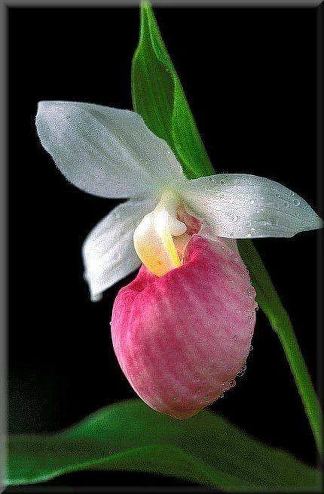 Flower-1641.jpg