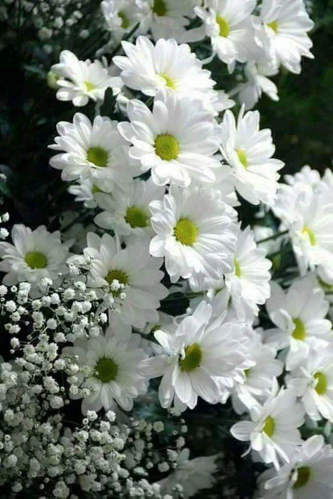 Flower-1642.jpg