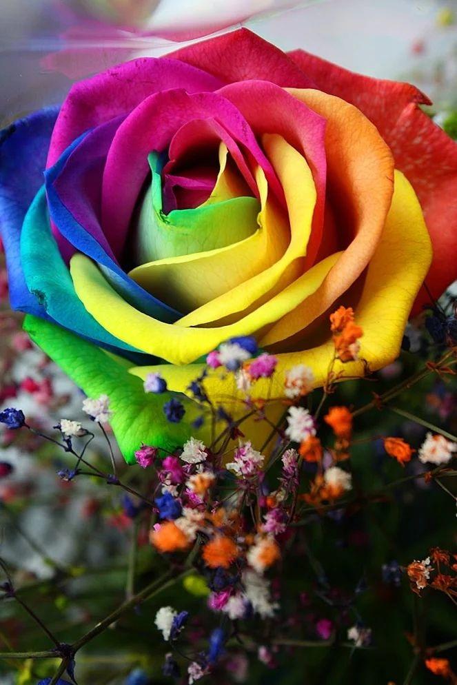 Flower-1644.jpg