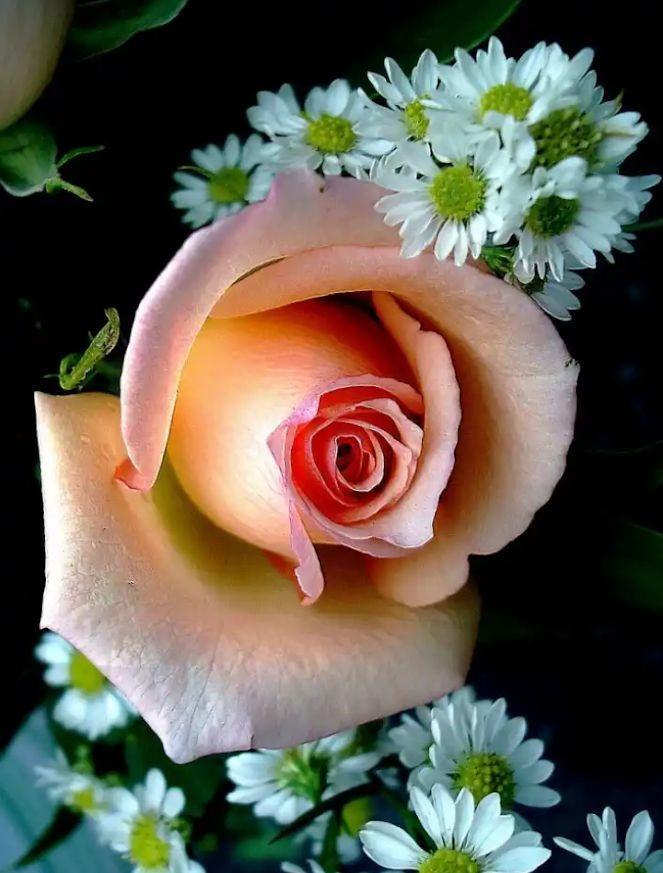 Flower-1699.jpg