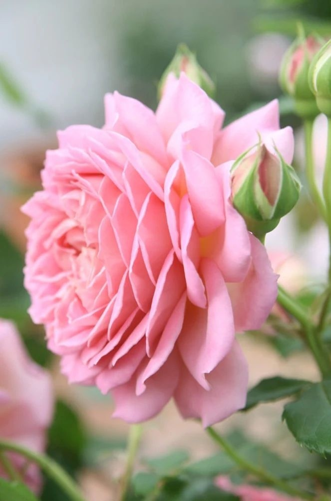 Flower-1700.jpg