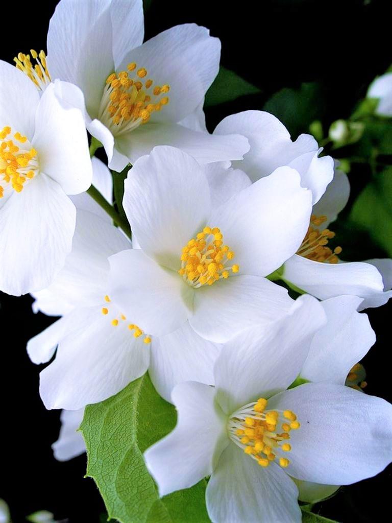 Flower-1739.jpg