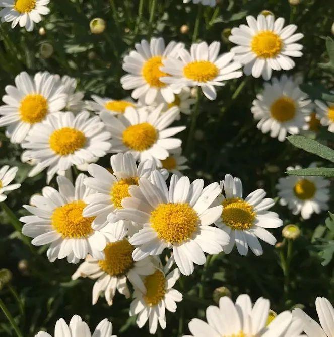 Flower-1829.jpg