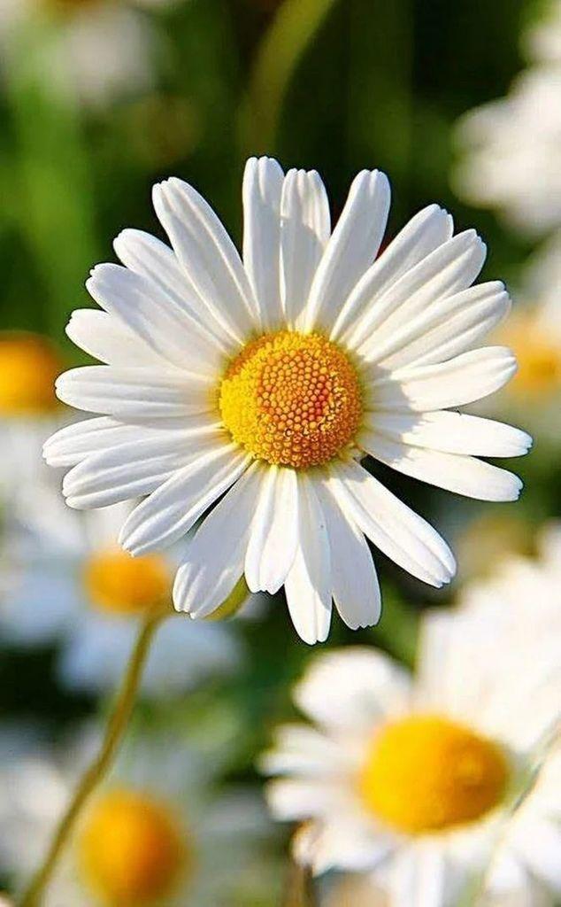 Flower-1830.jpg